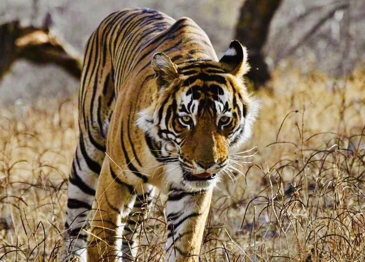 мурдешвар - сафари к тиграм